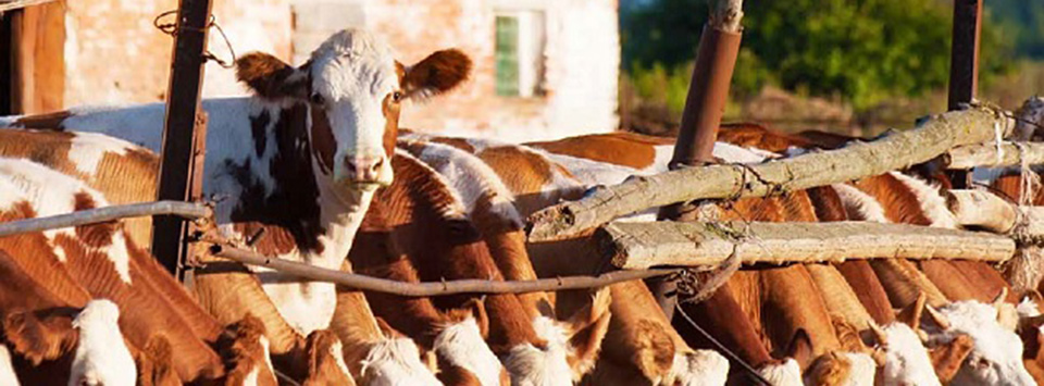 Global best practice guidelines for reducing greenhouse gas emissions from livestock