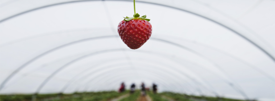 A Water Solution for Spanish Strawberry Farmers