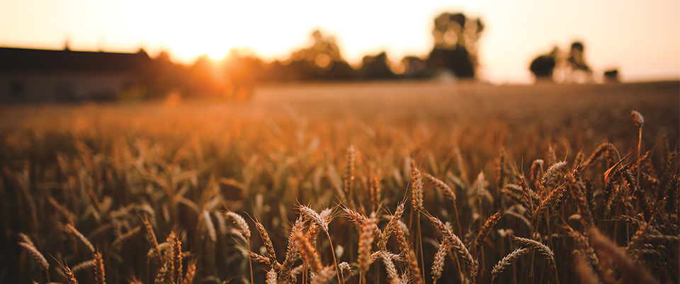 Image Agriculture sai platform - definition