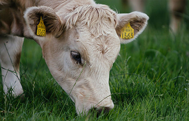 European Roundtable for Beef Sustainability recognises initiatives across Europe picture