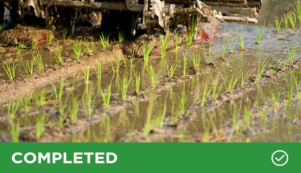 SAIRISI: Sustainable Italian Rice picture