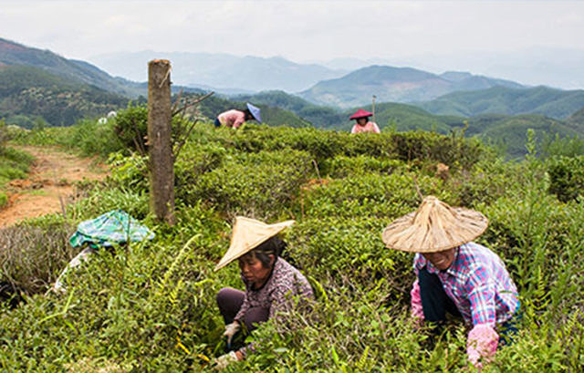 Opportunity and strong interest for sustainable agriculture in China picture