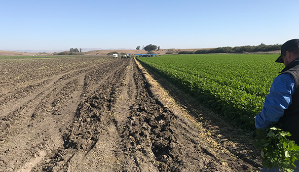 Top 5 challenges and opportunities for farmers in California picture