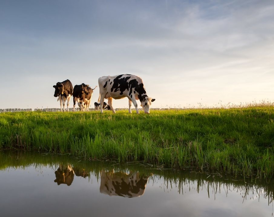 Why the Sustainable Dairy Partnership picture
