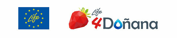 LIFE 4Doñana: a legacy of SAI Platform's Doñana Berry Project picture