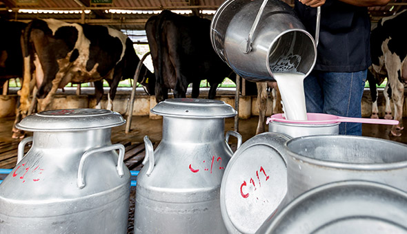 Sustainable Dairy Partnership ready for industry implementation picture