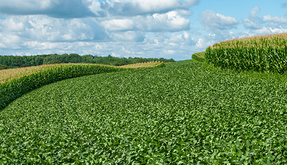 Building an industry consensus on regenerative agriculture picture