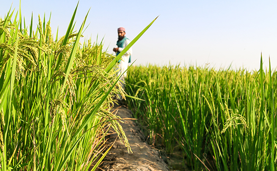Sustainable Agriculture Partnerships (Pakistan) picture